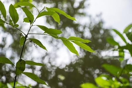 Estudo busca alternativas de combate a infrações ambientais